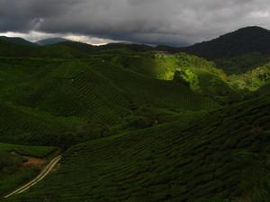 Cameron Highlands, Malezja