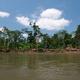 Dżungla widziana z rzeki Napo
