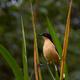 Alarm Bird