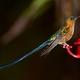 Kolibry z kordyliery wschodniej